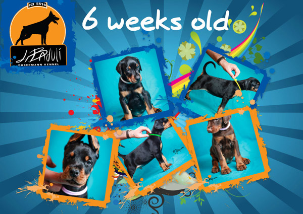 news-puppies-6weeks